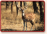 Wildlife of Ranthambore, Rajasthan